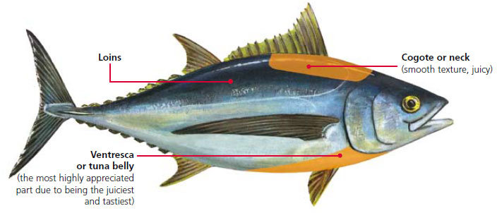 Parts of the Albacore