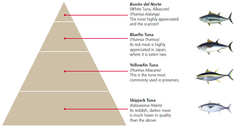 Pyramid representing the Quality-Price-Quantity of Tuna