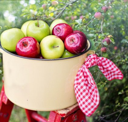 Benefits of apples. Helps with constipation, diarrhoea...